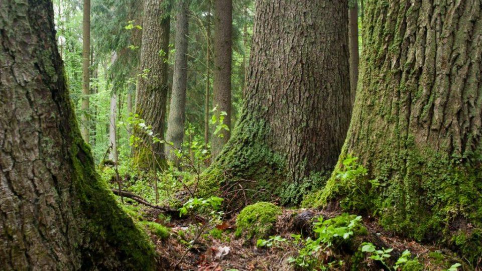 Privačių miško savininkų konsultavimas